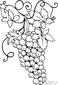 cómo dibujar una uva