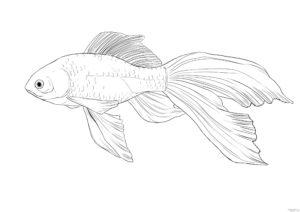 como se dibuja un pescado 1