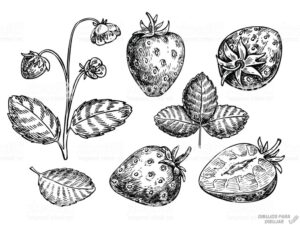 dibujos de fresas a color