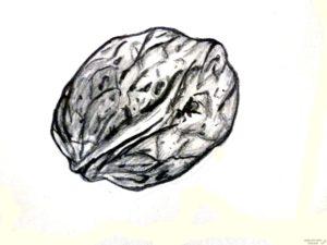 frutos secos dibujos para colorear 2