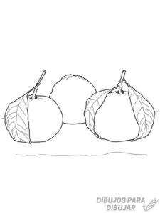 imagen de una mandarina para colorear