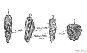 imagenes de chile poblano