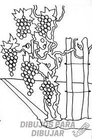 imagenes de uvas para dibujar