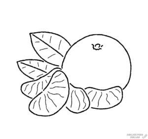 mandarina en dibujo 1