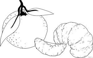 mandarina para colorear 1