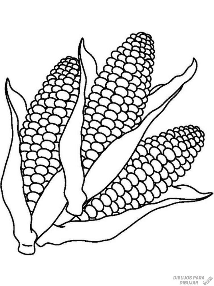 planta de maiz para colorear