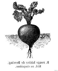 propiedades de las hojas de la remolacha