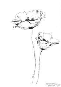 amapola dibujo