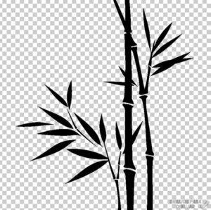 bamboo dibujo