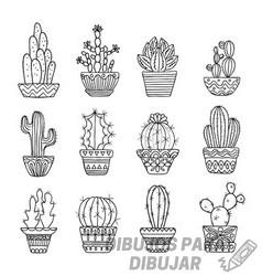 cactus pintados