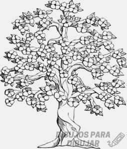 como dibujar un arbol de cerezo a lapiz