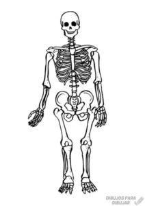 como dibujar un esqueleto