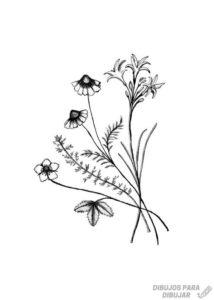 dibujos de flores a lapiz