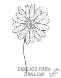 dibujos de flores margaritas