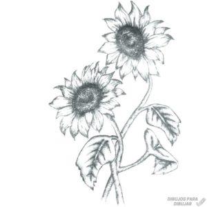 dibujos de girasoles a lapiz