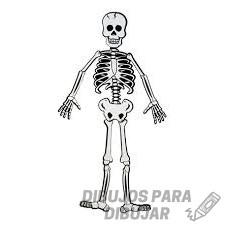 esqueleto humano animado