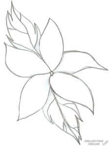 flor azucena caracteristicas