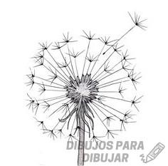 flores dibujadas a lapiz