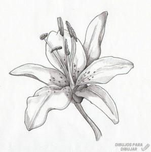 flores lirios fotos
