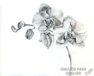 flores orquideas fotos