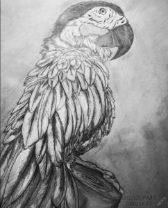 imágenes de animales para dibujar fáciles