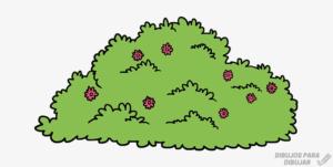imagenes de arbustos y sus nombres
