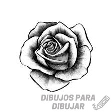 imagenes de flores y rosas
