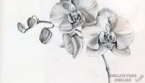 imagenes de orquideas animadas
