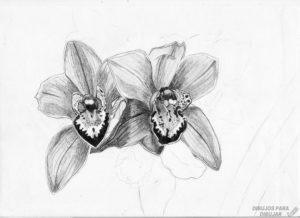imagenes de orquideas blancas