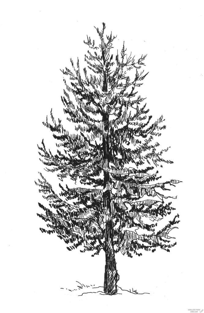 imagenes de pinos de navidad para dibujar