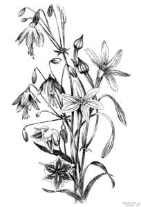 imagenes de plantas con sus nombres