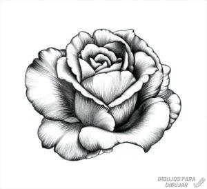 imagenes de rosas animadas