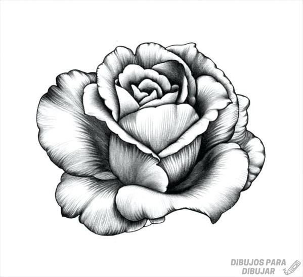 Dibujos De Rosas 190 Lindas Y A Lápiz