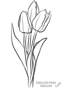 imagenes de tulipanes de colores