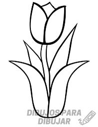 imagenes de tulipanes para colorear