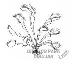 imajenes de plantas carnivoras