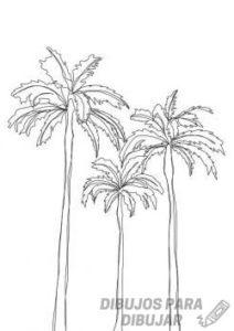 palmeras tropicales fotos