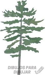 pinos para dibujar