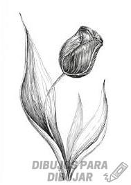 tulipanes pintados