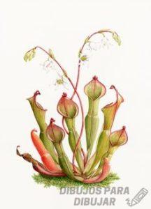 ver fotos de plantas carnivoras